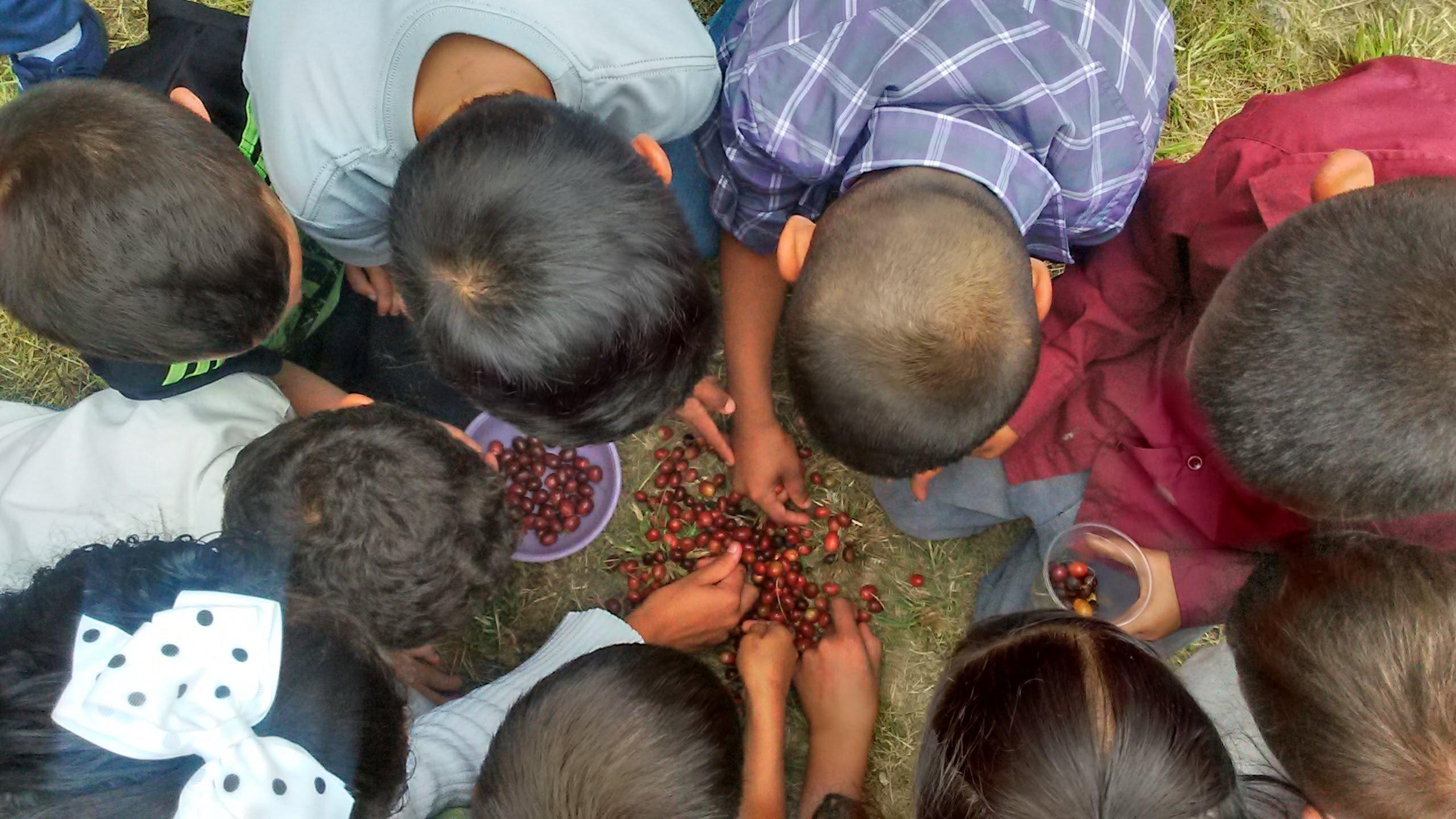 Entendiendo un poco más el Mercado de café para fines de conservación
