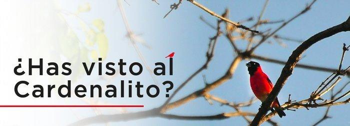 ¡Estrenamos nuestro sitio web en español!