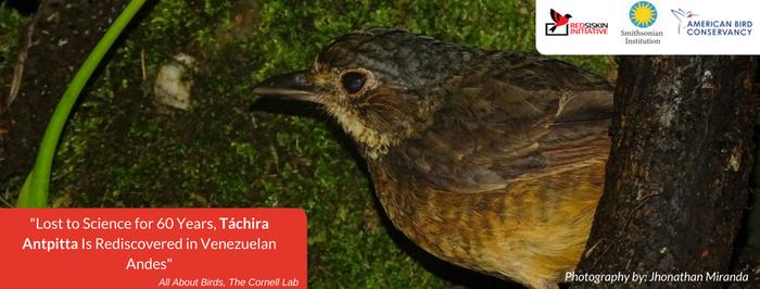 Más alla del cardenalito: Redescubrimiento del Hormiguero Totoroi Tachirense