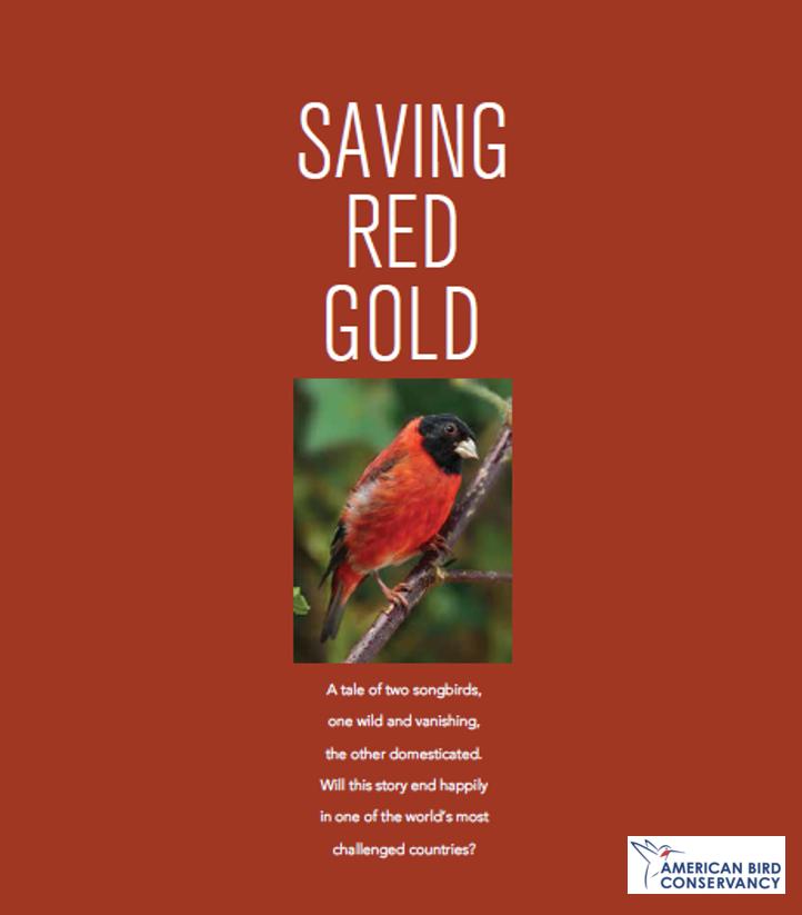 Salvando Oro Rojo, en ABC Magazine