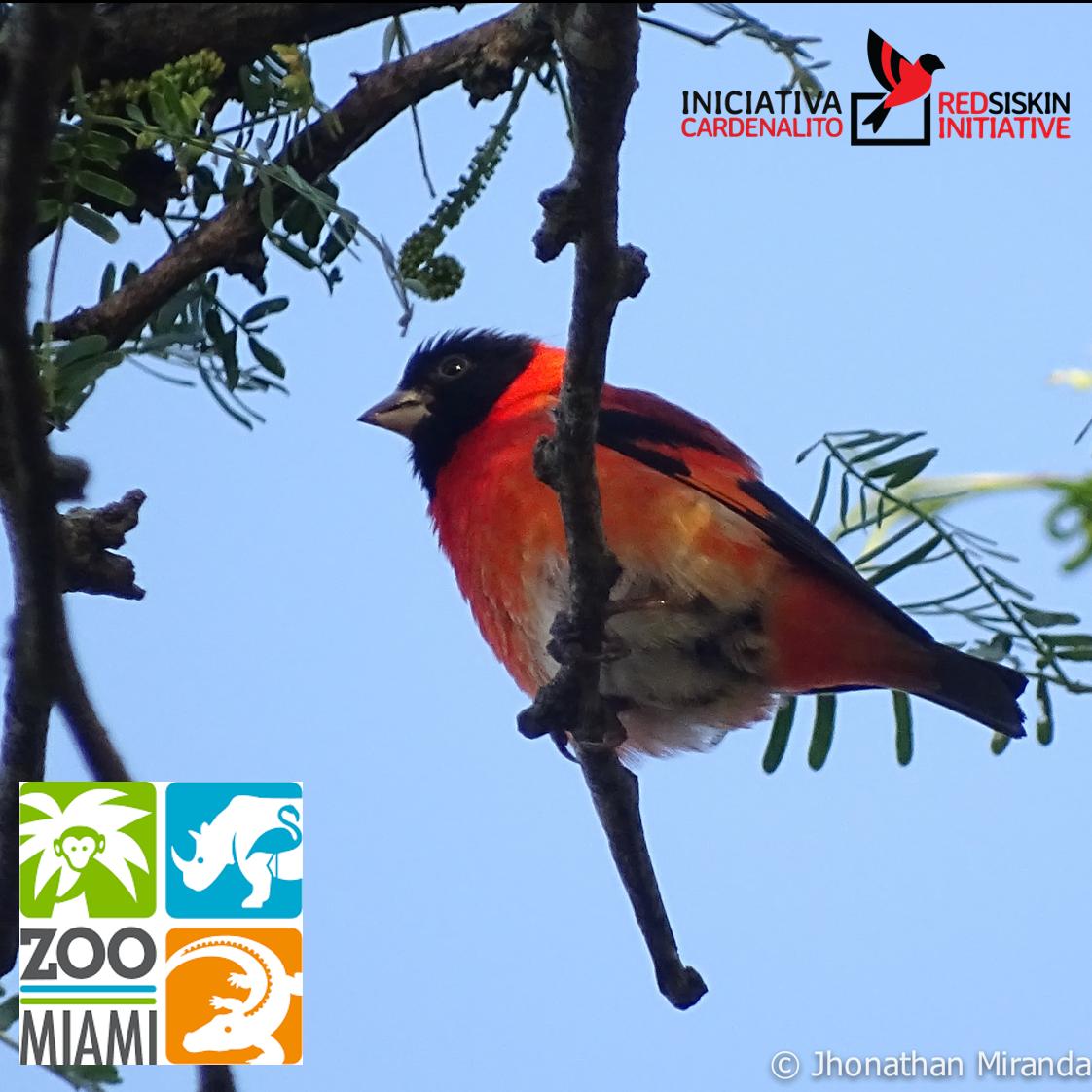 Bienvenido Zoo Miami a la familia de Iniciativa Cardenalito