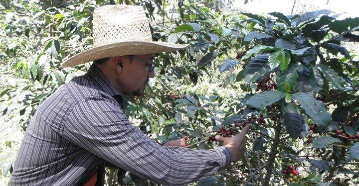 """""""Aves y Café"""", orgánico y Amigable a las Aves"""
